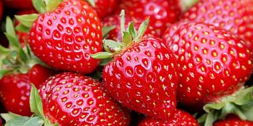 Koninklijke Beuk, Dagtochten - Zomerplezier, aardbeien