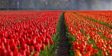 Bloembollenroute & Hortus Alkmaar