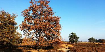 Koninklijke Beuk, Dagtochten - Den Bosch en Nationaal Park de Loonse en Drunense Duinen