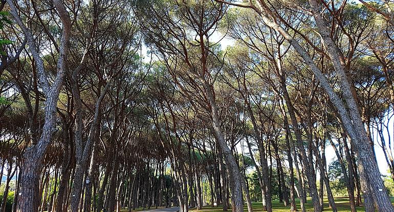 Koninklijke Beuk, Incentives, meerdaagse reis - Herfstkleuren Italie, Montecatine