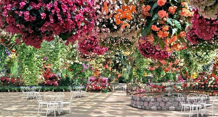 Koninklijke Beuk, Dagtochten - Zwevende bloementuin en aardbeien plukken